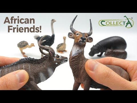 Ostrich & Chicks / Waterbuck / Mountain Nyala / Pygmy Hippo & Calf CollectA Review for Kids
