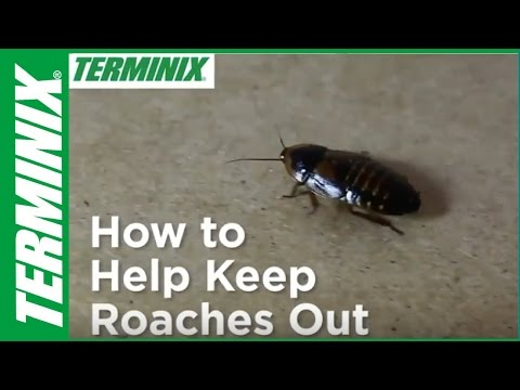 Protect Home From Roaches - How To Help Keep Roaches Out - Terminix