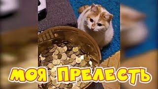 Лучшие видео про кошек 2019. Подборка приколов про кошек и котов, смотреть лучшие приколы 2019 #38