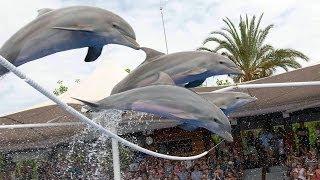 МАЙОРКА #6: Шоу дельфинов в дельфинариуме Маринеланд / Dolphins Show in Marineland Mallorca