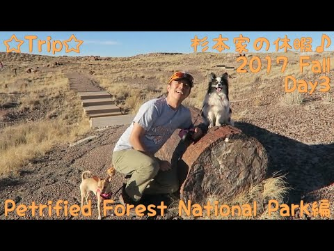 ☆Trip☆杉本家の休暇♪ 2017 Fall Day3 Petrified Forest National Park編