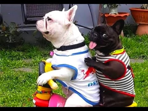 SOMETHING IS WRONG with YOU if you DON'T LAUGH - FUNNY DOG compilation