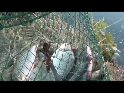 Pescuit caras pe riul Olt ,barajul Ionesti 2014