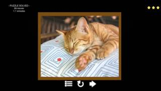 [Kitty Cat Jigsaw Puzzles] Play