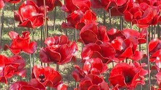 У стен Тауэра появились сотни тысяч керамических маков в память о жертвах войны 1914-1918 (новости)
