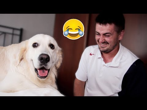 My Dog Reacts to the Words 'I Love You' [FUNNIEST REACTION]