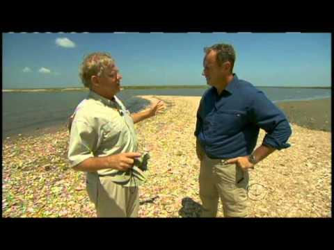 Louisiana Wetlands Woes