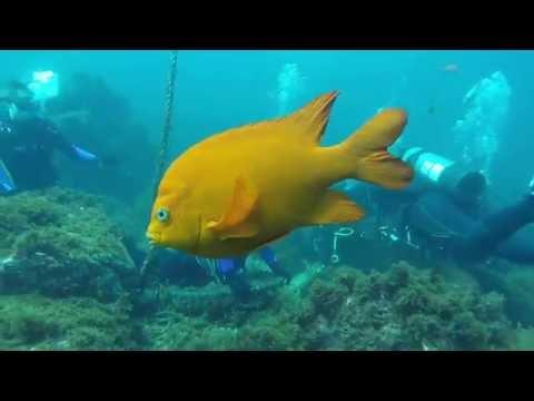 orange-county-scuba-center-certified-us-to-dive!