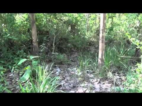 FRANK CUESTA - Vibora Russel enorme serpiente con veneno hemotóxico (Natural Frank)