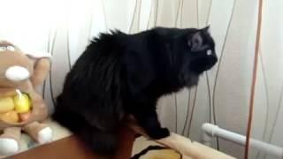 кот vs голубь