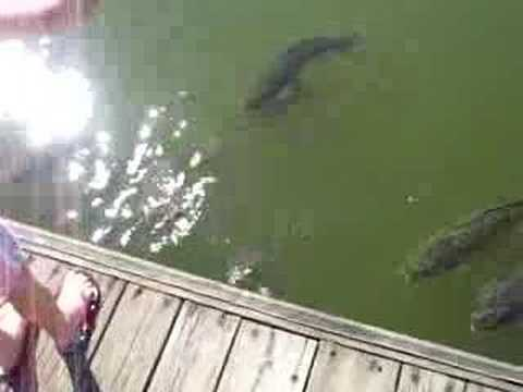 Huge fish at stonewall jackson resort youtube for Jackson lake fishing report