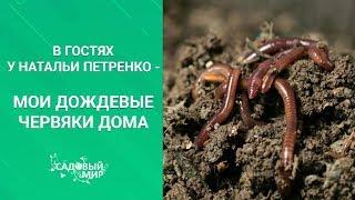 как сделать биогумус самостоятельно с использованием дождевых червей