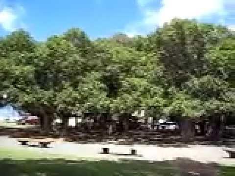 Banyan Tree - Lahaina - Maui 2010