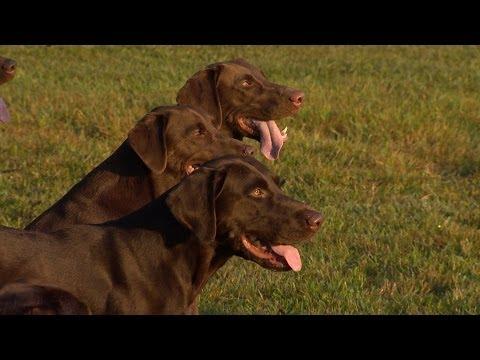 Wild SideTV-Gun Dog Training