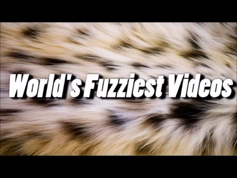 Funny Animals | A Funny Animal Compilation 2016 FUNNIEST SIAMESE CATS EVER