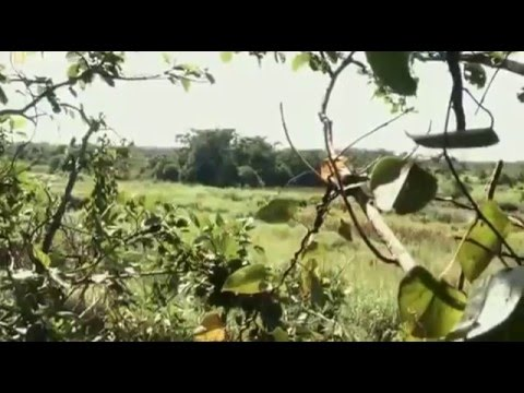 Man Eater of the Congo   National Geographic Wild Documentary