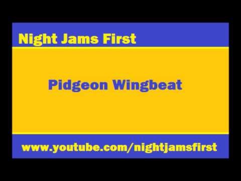 Night Jams First presents: Pidgeon Wingbeat/The Vogelkop Bowerbird