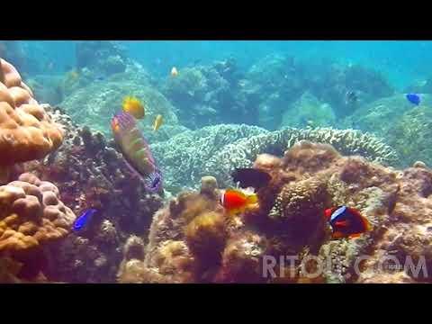 阿嘉島2014珊瑚礁と熱帯魚