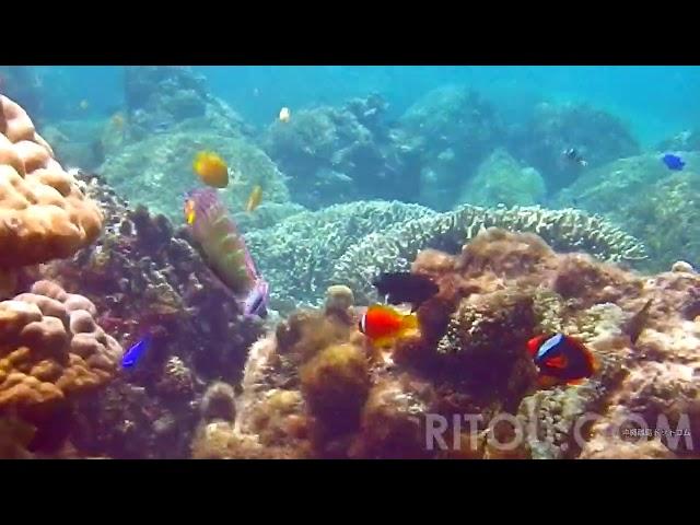 動画でバーチャル沖縄旅行「阿嘉島水中編」〜離島ドットコム
