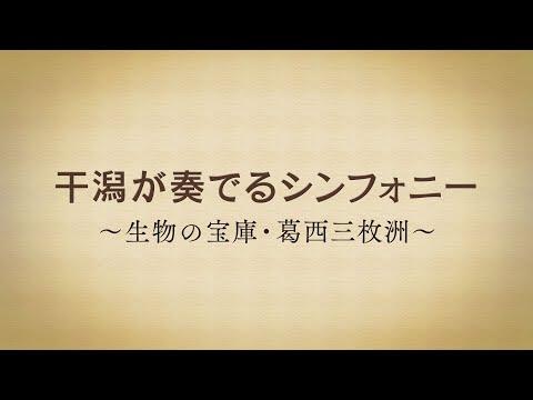干潟が奏でるシンフォニー ~生物の宝庫・葛西三枚洲~