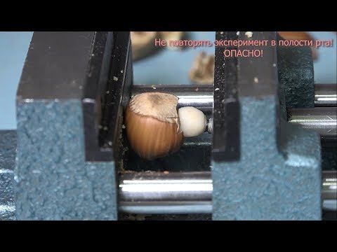 БАТЛ: орехи против циркониевых коронок!
