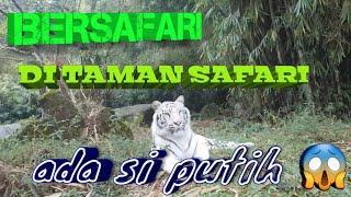 Taman safari indonesia cisarua bogor | aneka satwa dan aneka pertunjukkan with affan dan zuhdan