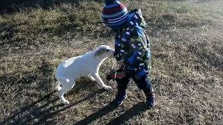 Джек. Маленький целовашка милашка ищет дом и новых родителей. Щенок в дар.