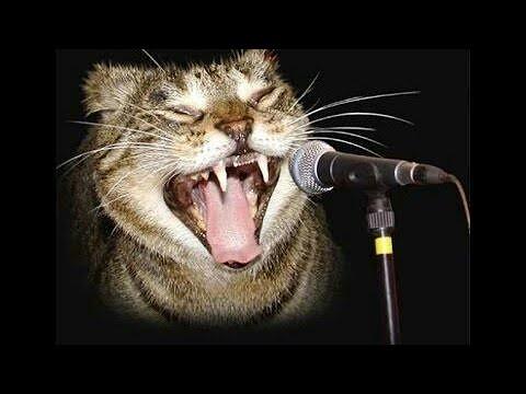 hebat banget.ayam dan kucing bernyanyi super lucu