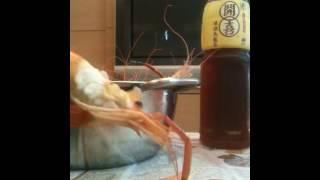 泰國蝦的去殼~最後黑黑的胃囊不可以吃喔!