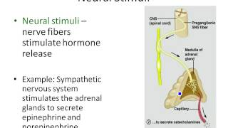 Chapter 16- Stimuli for Hormonal Secretion