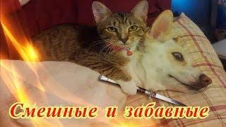 Прикольные животные видео Кошки Собаки Позитив Создай себе хорошее настроение