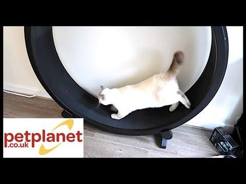 ONE FAST CAT WHEEL TRAINING! -  PETPLANET.CO.UK