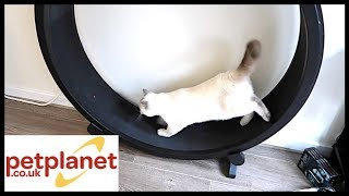 ONE FAST CAT WHEEL TRAINING!   PETPLANET.CO.UK