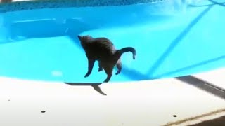Animals Getting Scared Over Nothing  [Funny Pets]