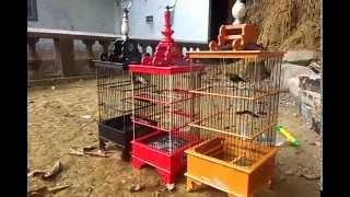 Video Tips perawatan burung pleci download MP3, 3GP, MP4, WEBM, AVI, FLV Agustus 2018