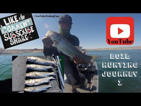 BOIL HUNTING! LAKE MEAD STRIPED Bass Fishing - BOULDER HARBOR