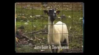 LE REVEIL DUROY - JUSTIN BIEBER Ft. CHEVRE HUMAINE