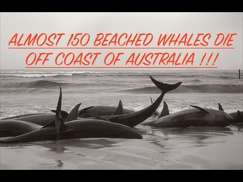 Almost 150 Beached Whales Die Off Coast of Australia, Was Sonar Involved?