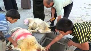 مشروع اضاحي العيد برعاية المكتب الاغاثي الانساني في مدينة خان شيخون ثالث ايام العيد
