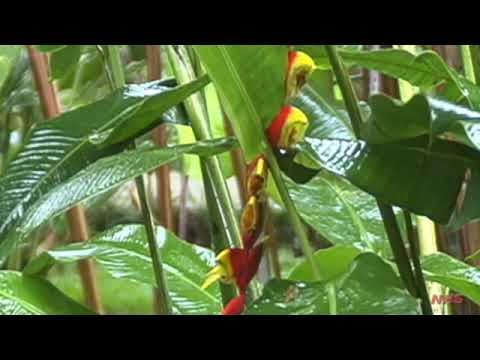 Central American Tropics: An Introduction for Naturalists Part I