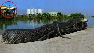 दुनिया के अब तक पकड़े गए 7 सबसे बड़े सांप   7 Biggest Snakes Ever Found