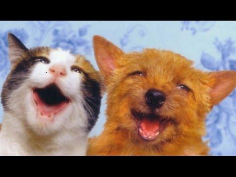 Mascotas Graciosas y Tiernas Mascotas Asombrosas Mascotas