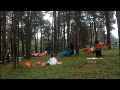 Wisata Hutan Pinus yang Sejuk & Asri