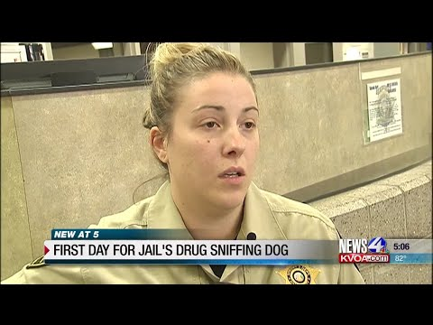 Crime Trackers: Diesel sniffs out drugs at Pima County Jail