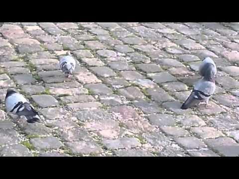 Izmir Konak Square of Pigeons