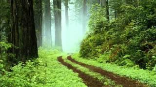 Labratory-Dreamland Paradise.wmv
