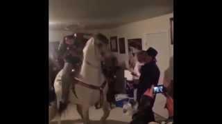 The horse is dancing in the house / Лошадь танцует в доме