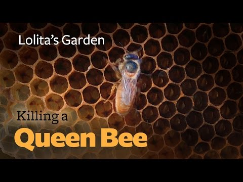 To Kill a Queen Bee