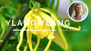 Ylang Ylang - The Oil of Lovers