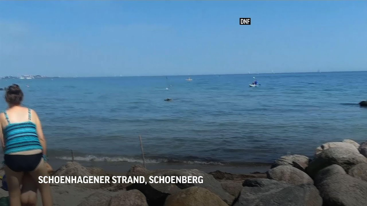 Swimming wild boar gives German beachgoers a scare